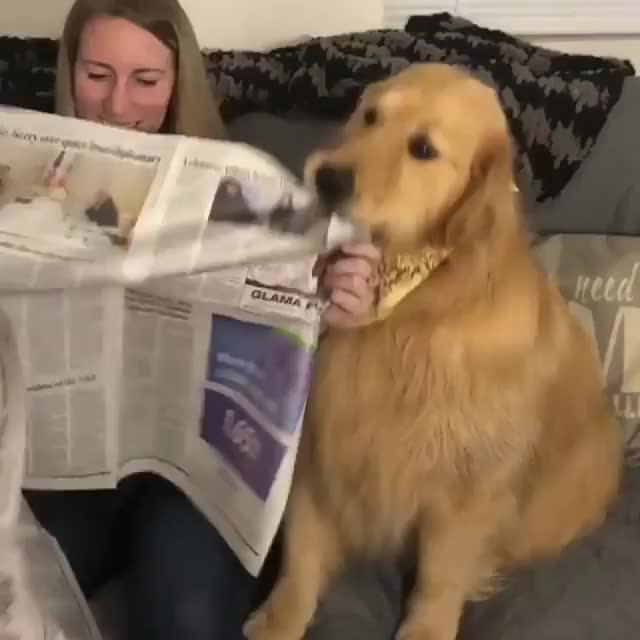 Watch and share Fake News GIFs and Dog GIFs by sdfdsfdsfs1 on Gfycat