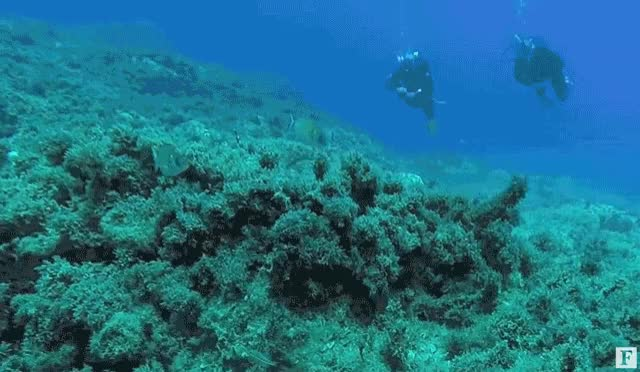 Watch and share AnimatedGIF CoralBleaching ScubaAndOptimisticFacts GIFs on Gfycat