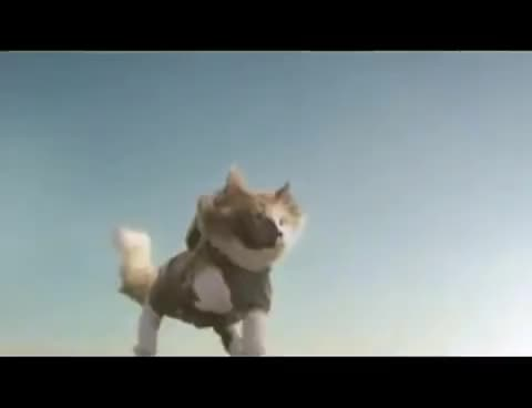 cat, skydive, skydiving cat GIFs