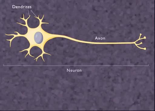 Watch and share The Nerve Impulse [HD Animation] GIFs on Gfycat