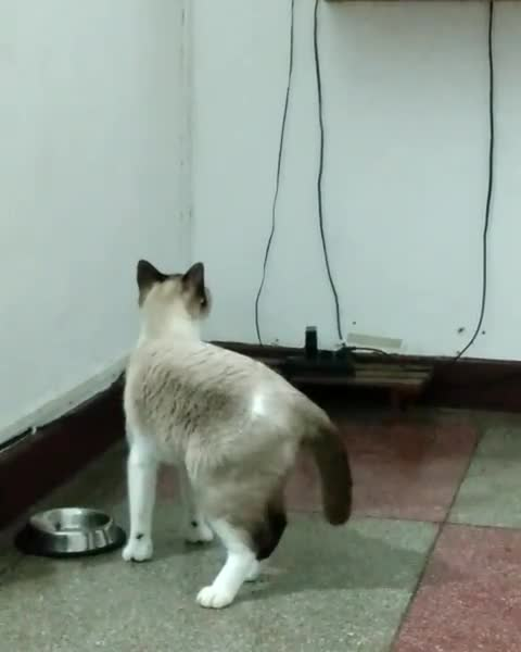 aww, cat, cats, Did this kitty spot something he loves? GIFs