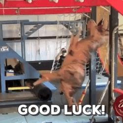 good luck, t rex, tyrannosaurus rex, Good Luck T-Rex! GIFs