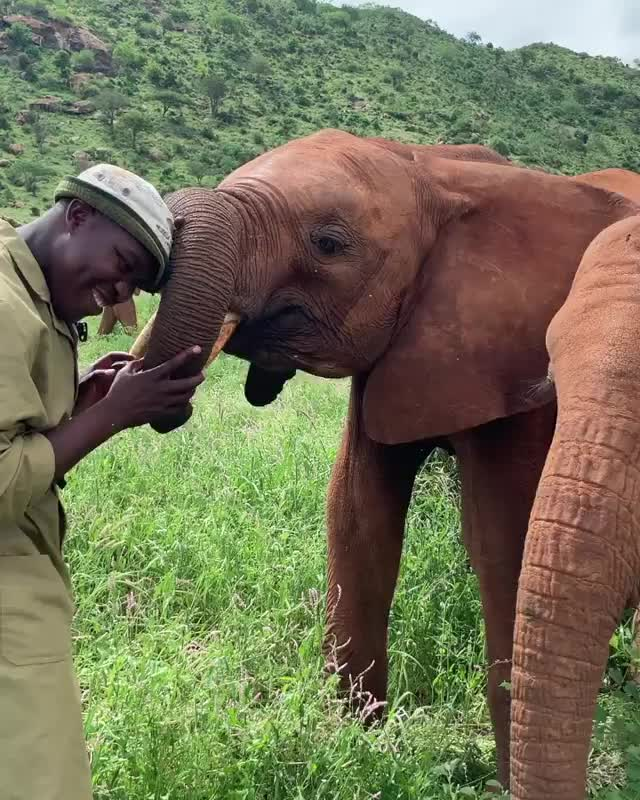 Watch and share Elephant GIFs and Ngilai GIFs by vani  on Gfycat