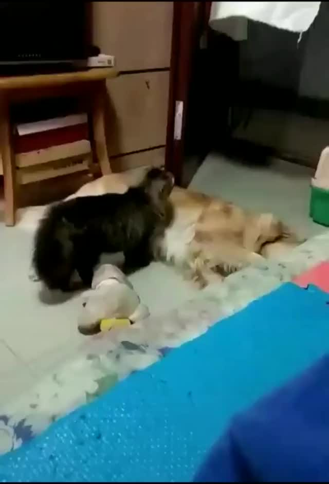 Watch and share Cat GIFs and Dog GIFs by wj7_02 on Gfycat