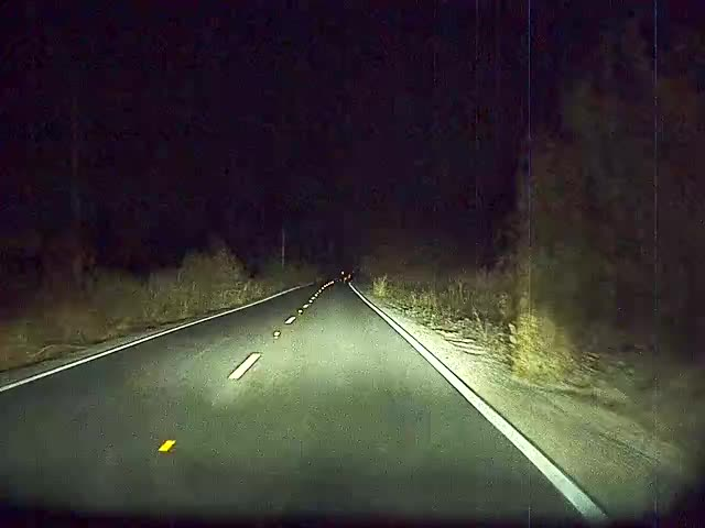 Watch and share Dashcam GIFs and Deer GIFs by dlsspy on Gfycat