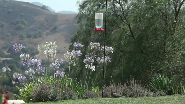 Watch and share 8x Slow-mo Speed Roadrunner Hummingbird Https://youtu.be/onVbjDW-tqQ GIFs on Gfycat