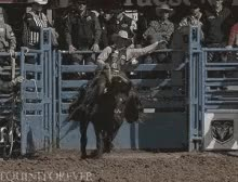 Watch Buck GIF on Gfycat. Discover more related GIFs on Gfycat