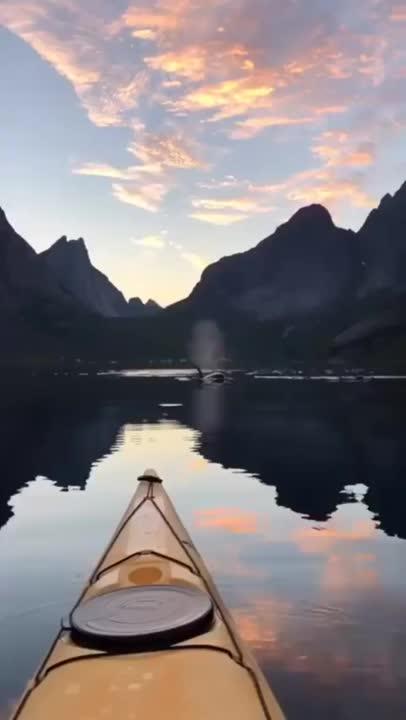 nature,  GIFs