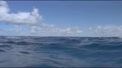 Watch this dolphins GIF by Riptide (@percypotter) on Gfycat. Discover more animals jumping, dolphins, dolphins jumping, marine life, marine mammals, oceans, water GIFs on Gfycat