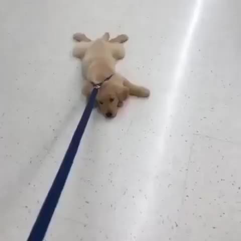 Watch and share Puppy GIFs by PM_ME_STEAM_K3YS on Gfycat
