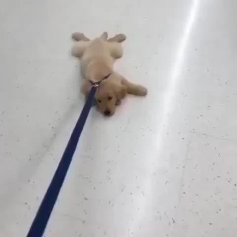 puppy, He's a mop. GIFs