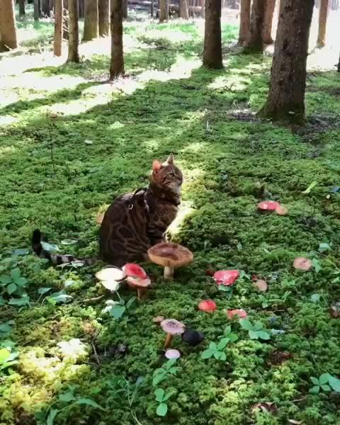 Watch and share Suki Cat GIFs by vani  on Gfycat