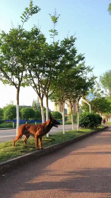Watch and share Strong Dog GIFs and Smart GIFs by soees on Gfycat