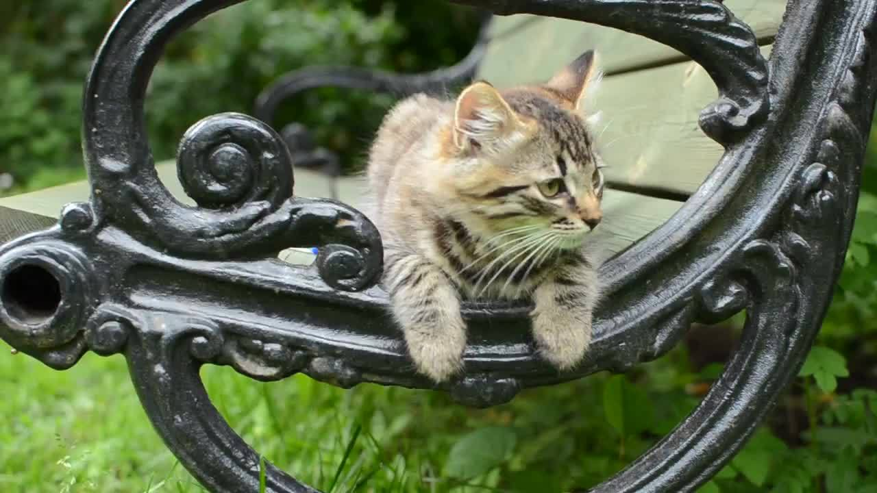 awwgifs, highqualitygifs, kittengifs, Kitten on a bench GIFs