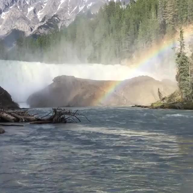 Watch this nature GIF by @peterm on Gfycat. Discover more nature GIFs on Gfycat