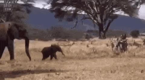 Watch and share 친구들과 놀고 싶은 새끼 코끼리 GIFs on Gfycat