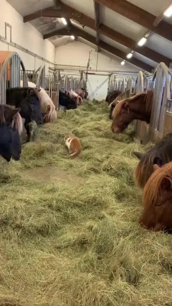 Watch and share Horses GIFs and Cat GIFs by Thund3rbolt on Gfycat