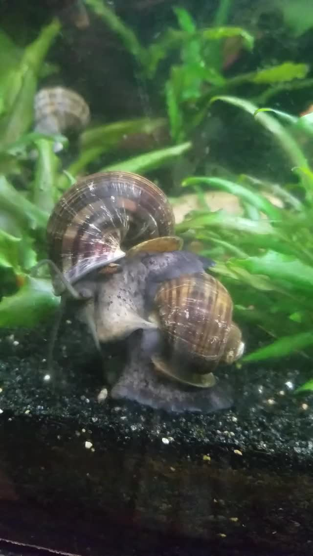 Watch and share Fighting Snails GIFs by otp1144 on Gfycat