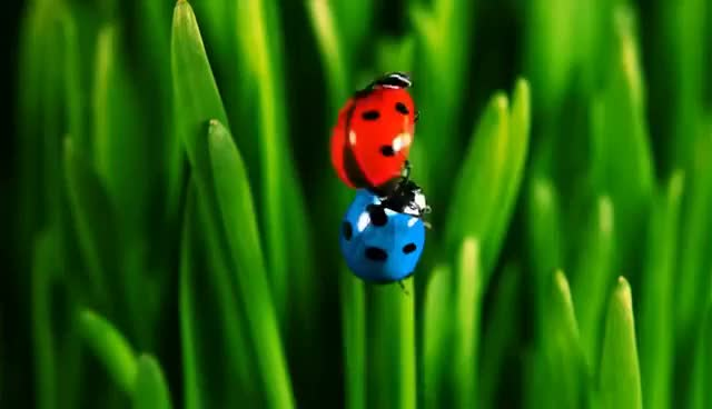 Watch and share Ladybug GIFs and Beetle GIFs on Gfycat