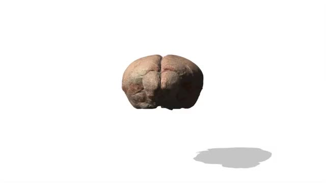 Waxholm mouse brain