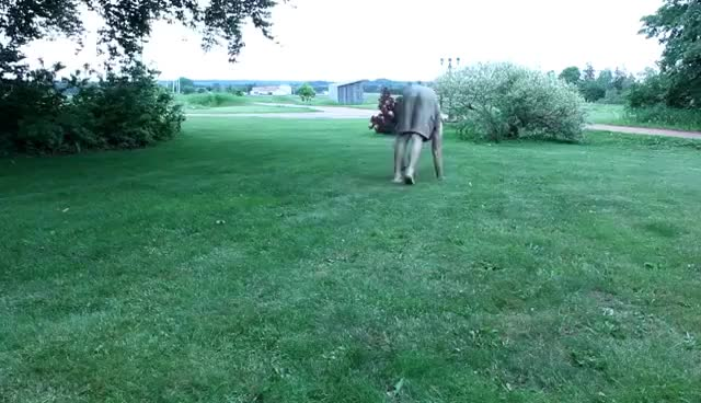Watch Basic Locomotion Training (No Gym Needed) GIF on Gfycat. Discover more related GIFs on Gfycat