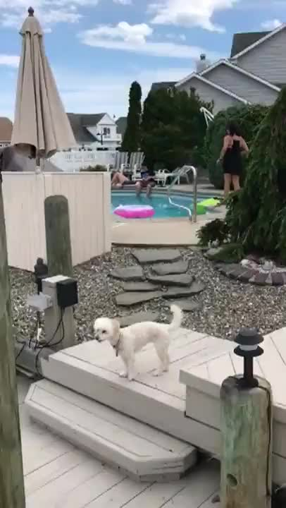 Watch and share Kid's Magical Summer Moment Destroyed By His Uncle GIFs by timmy6169 on Gfycat