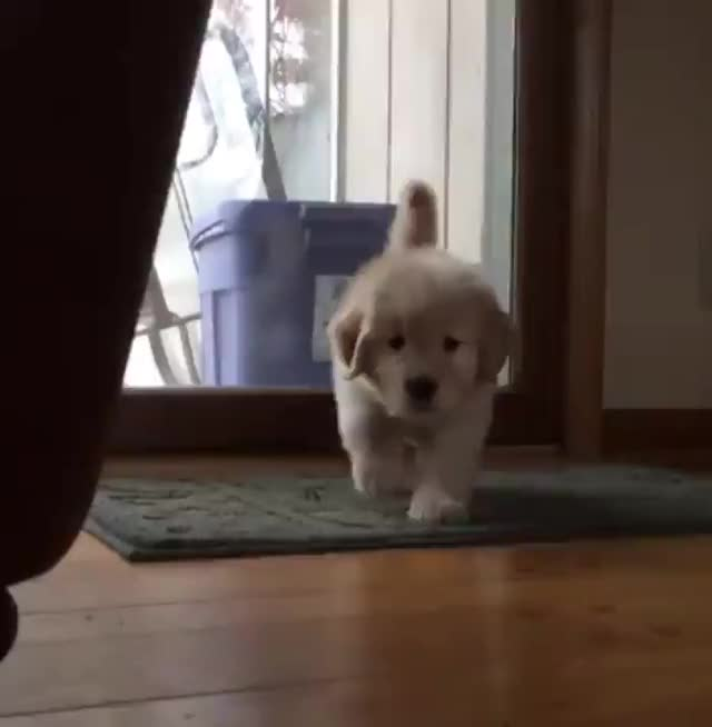 Watch this puppy GIF by tothetenthpower (@tothetenthpower) on Gfycat. Discover more puppy GIFs on Gfycat
