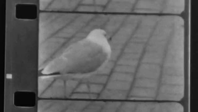 Watch and share Gull GIFs on Gfycat