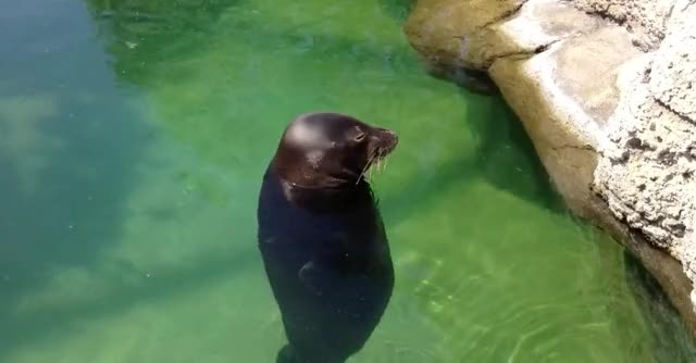 Watch this dumb GIF by GIF Queen (@ioanna) on Gfycat. Discover more animal, around, cute, dizzy, dumb, funny, monk, seal, silly, spin GIFs on Gfycat