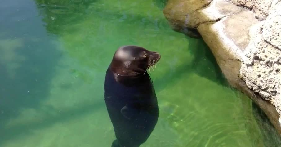animal, around, cute, dizzy, dumb, funny, monk, seal, silly, spin, Silly seal GIFs