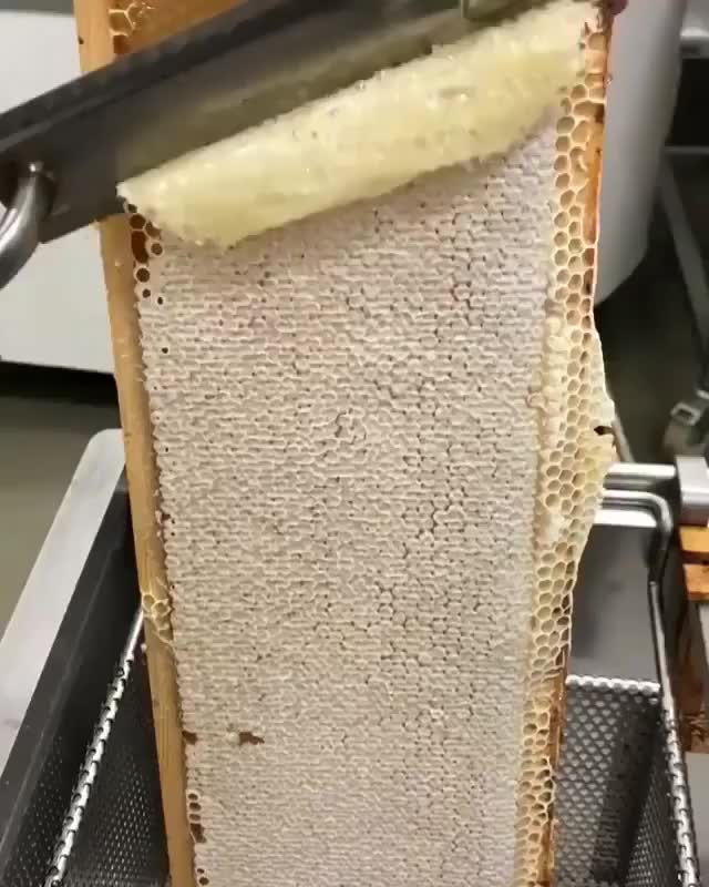 Watch and share Honey Harvesting GIFs by Jackson3OH3 on Gfycat