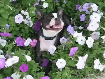 allergic, allergy, animal, aww, dog, epic, flower, flowers, funny, hilarious, pet, puppy, sneez, Funny dog GIFs