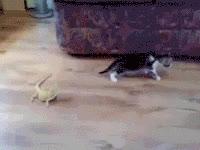 cat, lizard, pet, pets, animals GIFs