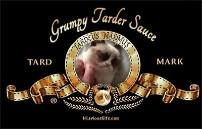 Watch and share Angry Cat Meme Generator GIFs on Gfycat