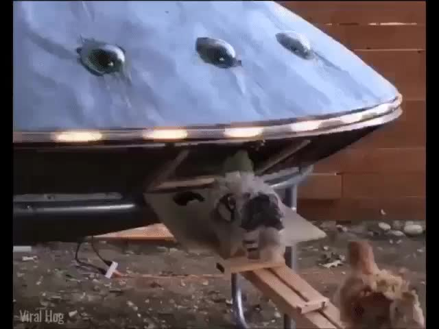 Watch and share Chicken Coup GIFs and Ufo GIFs on Gfycat