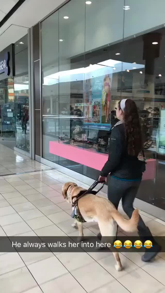 Watch My sisters guide dog always sneakily walks her into this store without her knowing I love dogs, man GIF on Gfycat. Discover more related GIFs on Gfycat