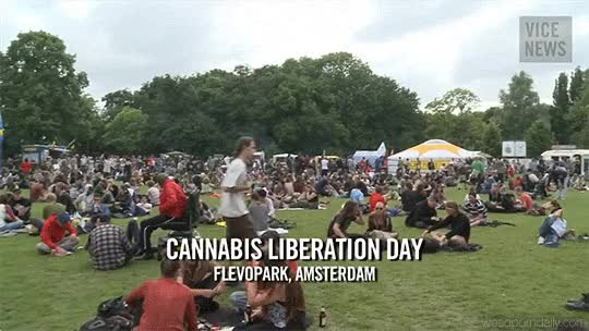 Watch and share Medical Marijuana GIFs and Amsterdam GIFs by WeedPornDaily on Gfycat