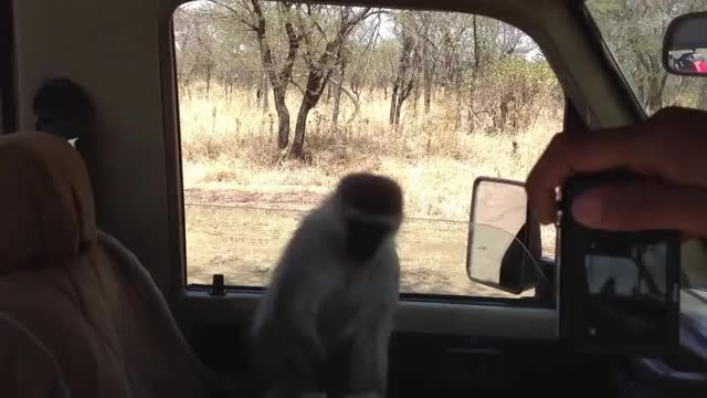 Watch and share Monkey GIFs by Mike on Gfycat