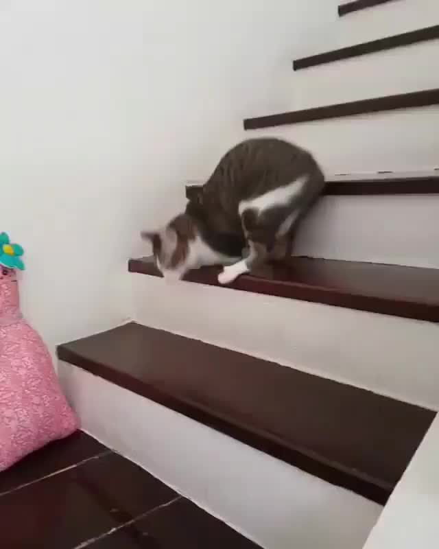 Watch this aww GIF by tothetenthpower (@tothetenthpower) on Gfycat. Discover more aww, awww, awwwww, cat, cute GIFs on Gfycat