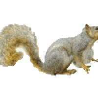 Watch Squirrel airbags GIF on Gfycat. Discover more related GIFs on Gfycat