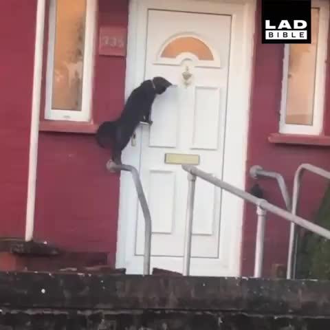 cat, Knock knock GIFs