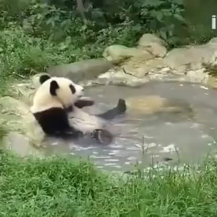 Watch this animal GIF by Anastasiia Ku (@anastasiiaku) on Gfycat. Discover more animal, animals, cute, panda, panda_gifs GIFs on Gfycat