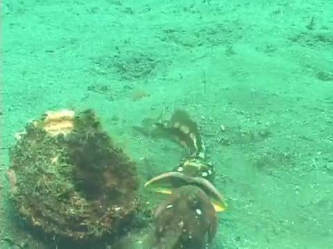 thedepthsbelow, Sarcastic Fringeheads : Channel Islands : UGENA (reddit) GIFs