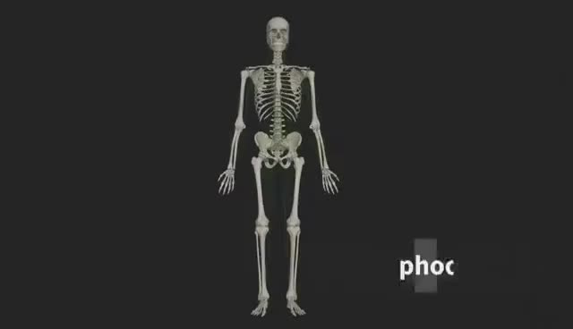 Introduction To The Muscular System Animated Tutorial Complete