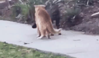 cats, fight, funny, karate, let'sdo karate GIFs