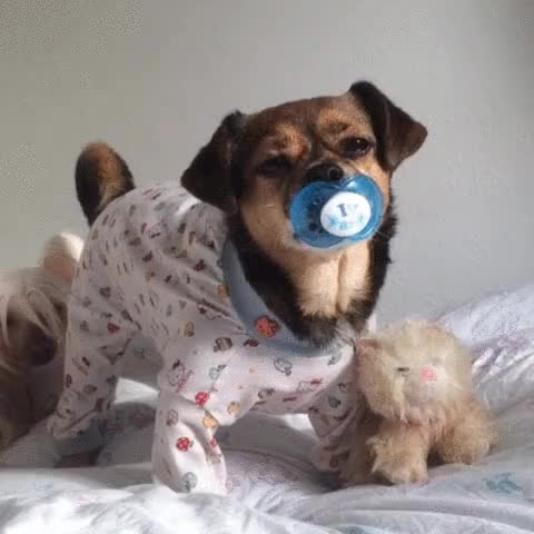 Watch and share Cuando Los Perros Te Traen Cosas, En Realidad Te Están Dando Un Regalo. GIFs on Gfycat
