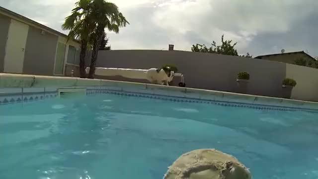 Gotta love Jack Russel terriers