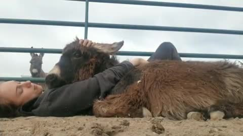 govegan, livekindly, longhopes, longhopes donkey shelter, rescue, sanctuary, Noah is a snuggler at Longhopes Donkey Shelter in Colorado GIFs