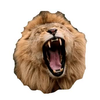 Watch lion GIF on Gfycat. Discover more lion GIFs on Gfycat