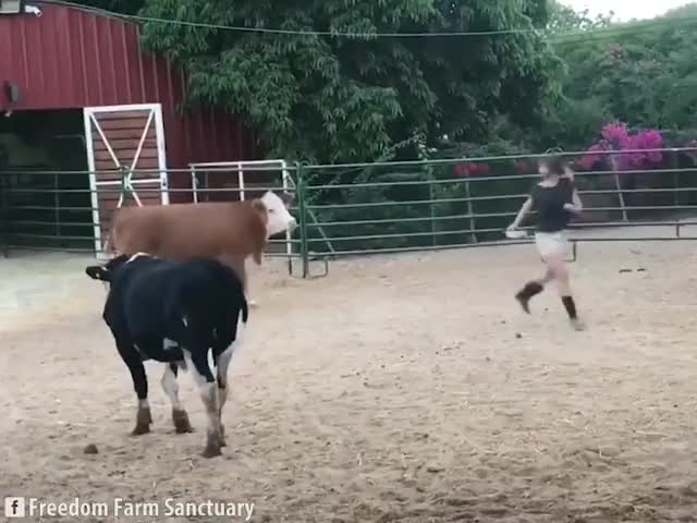 Watch Enjoying Life at Freedom Farm Sanctuary GIF on Gfycat. Discover more related GIFs on Gfycat